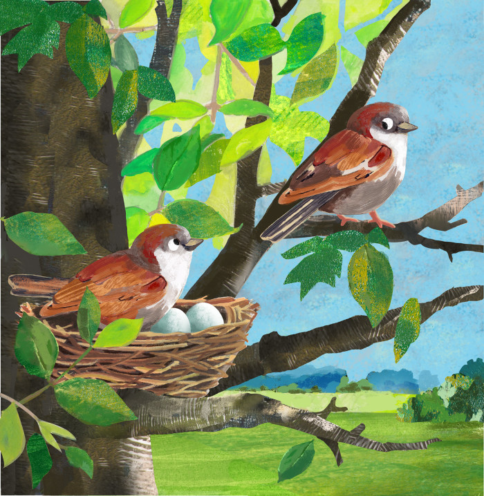Little Sparrows and their Nest